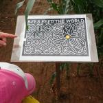 This year's corn maze map - amazing!