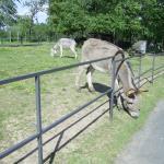 Dans le parc un âne heureux de vivre