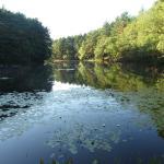 Frye Pond