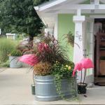 Foto The Pines Motor Lodge