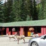 Miette Hot Springs Resort Foto
