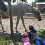 The kids love the horses!