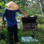 Phu Quoc Bee Farm Cafe Picture