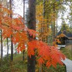 Colours of the autumn time