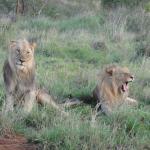 Photo de Morukuru Family Madikwe
