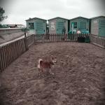 Doggy Beach Foto