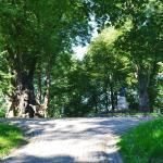Старые деревья, липы, окружают памятник