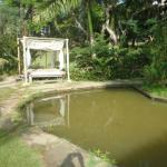 Jardin interno con lago del hotel