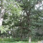 Ancient Oak Forest at Sherwood Hideaway