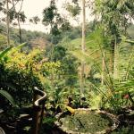 Photo de Waterfalls Homestay
