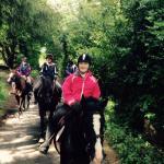 Hollywood Horse Trekking Centre