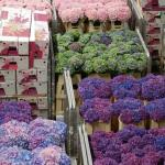Flower Auction
