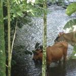 In the area of Palmera Costa Rica