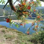 les lacs du cantal