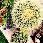 Splendido giardino!