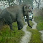 Sightseeing Wild Elephant by jeep Safari