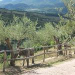 Photo of Agriturismo Ampugnano