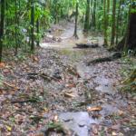 forêt tropical sous la pluie