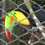 Friendly Toucan