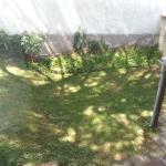 common back yard