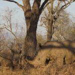 Photo of Makutsi Safari Springs