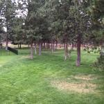 BEST WESTERN Ponderosa Lodge Foto