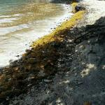 Rocky and Gnat infested beach!! Nothing like the resorts web sites pictures!