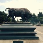 Bull just in front of hotel