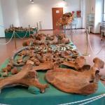 Museo Naturalistico e Paleontologico