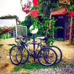 Nostre Bici al Faro troppo bella la strada di campagna che da capo mulini porta al faro..da fare
