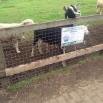 Deen City Farm Foto
