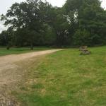 Our Garden area.