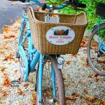 Guest bike