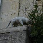 Les chats de la Romieu