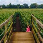 bridge and the maize maze