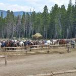 Horses in the corral