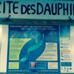 La cité des dauphins. Passe de Tiputa