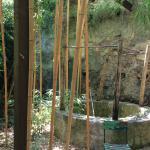 Le Jardin Les Bambous du Mandarin