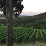 Foto di Il Borghetto di San Gimignano Agriturismo