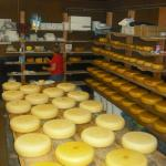 Next farm down the road who make wonderful Farmers Cheese.