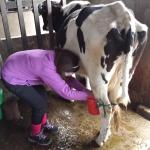 Milk your own cow