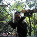 Refugio Herpetologico de Costa Rica Foto