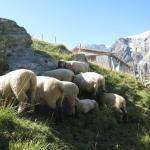 羊よけのゲートを開けて入ります。顔だけ黒いので、暑いのかみんな岩陰に顔を突っ込んでいました。頭隠して尻隠さず・・・