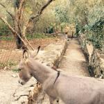Photo de Villa Gnocchi