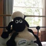 Shaun the Sheet Hot Water Bottle + Fluffy Towels
