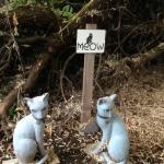 Cleo's cats