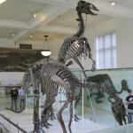 American Museum of Natural History - Wow.
