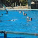 Show dos golfinhos