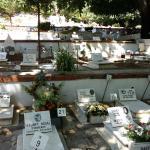 Cemitério dos animais de estimação