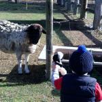 Meeting Shaun the Sheep